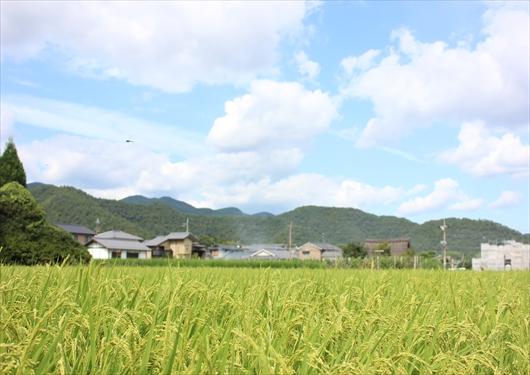 嵯峨野の田園風景