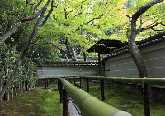 高桐院参道苔と竹林
