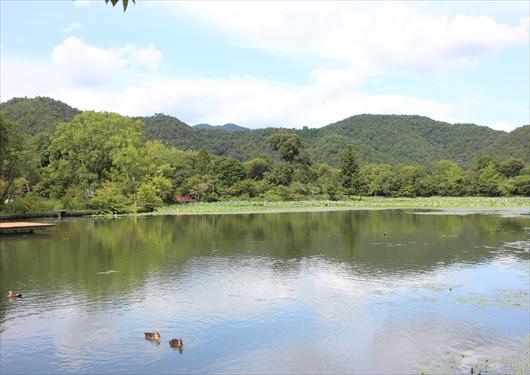 大覚寺の大沢池