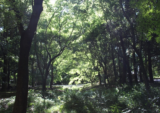 糺の森風景