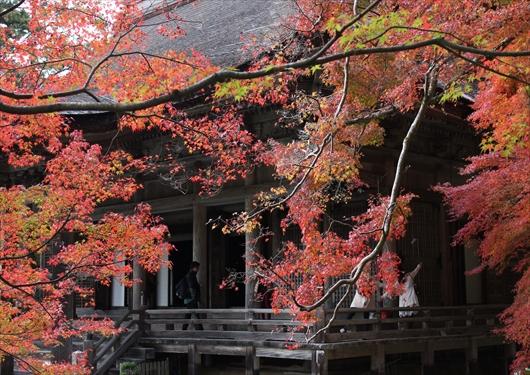 勝林院紅葉