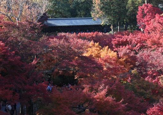 通天橋から紅葉