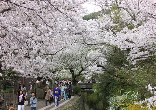 哲学の道と桜と混雑