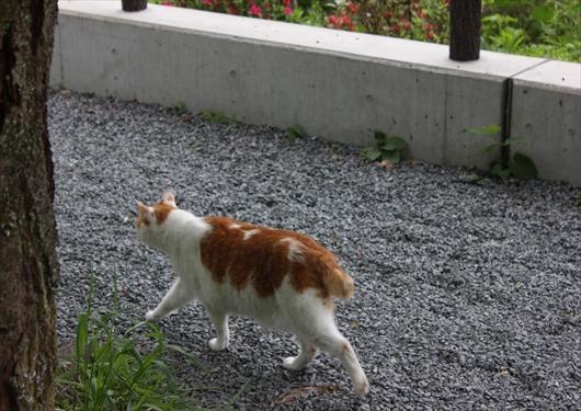 哲学の道の野良猫