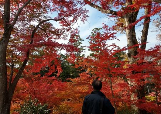 もみじ苑の紅葉