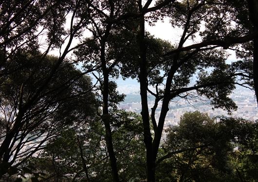 阿弥陀ヶ峰頂上から市内を望む