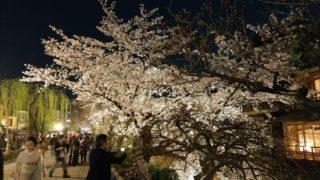 祇園白川夜桜
