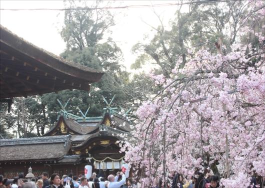 平野神社本殿前