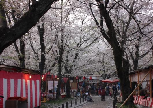 平野神社屋台と桜