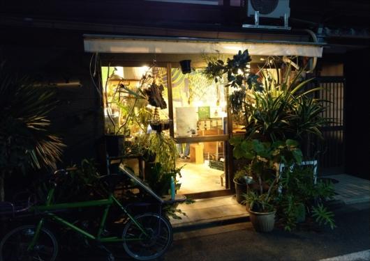 森林食堂観葉植物