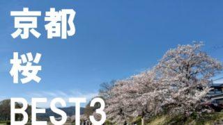 京都桜BEST3