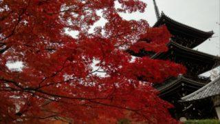 真如堂三重塔と紅葉