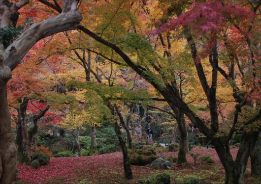 圓光寺の紅葉庭園