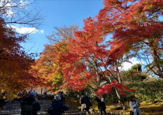 二尊院の紅葉の馬場