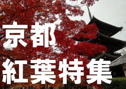 京都紅葉特集