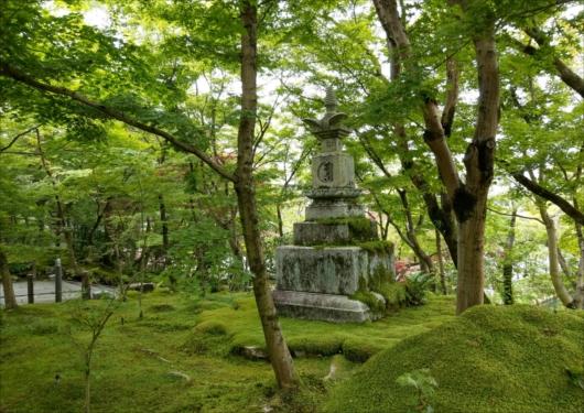 永観堂の苔庭