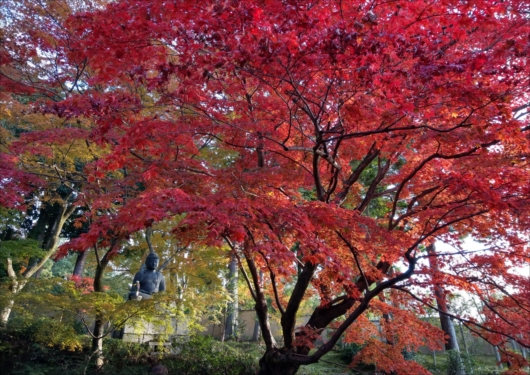 栄摂院紅葉