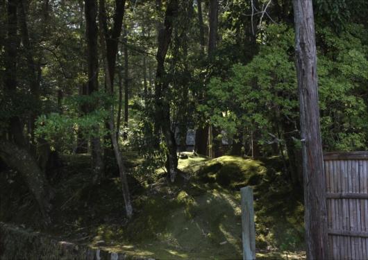 苔寺西芳寺