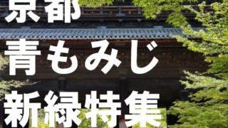 京都青もみじ新緑特集
