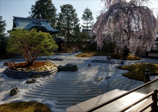 高台寺枝垂れ桜と庭園
