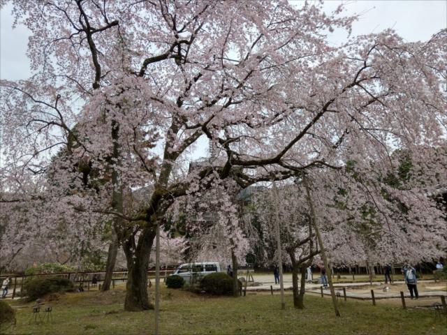 醍醐寺の桜伽藍エリア
