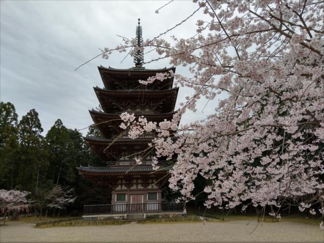 醍醐寺の桜五重塔前