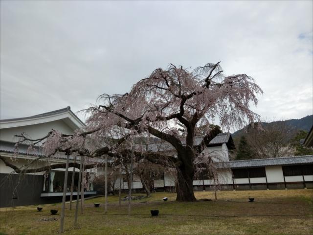 醍醐寺の桜霊宝館