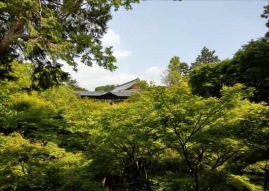 東福寺新緑の通天橋