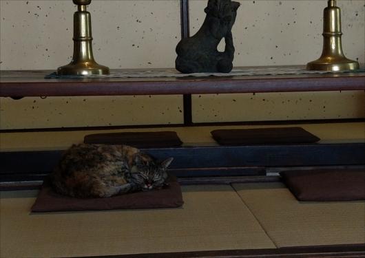 河井寛次郎記念館看板猫えきちゃん